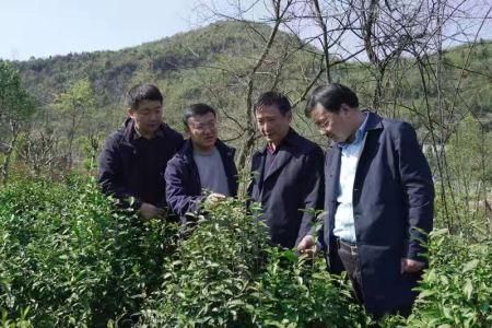 赵皖平率专家团队赴石台调研指导乡村振兴工作